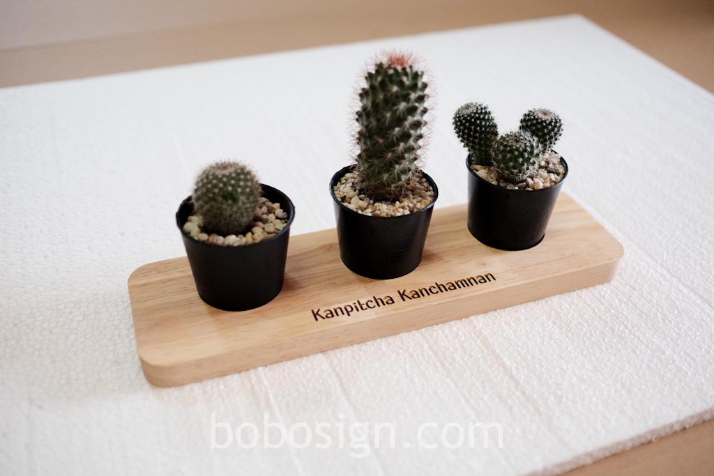 ถาดไม้ ยิงเลเซอร์ cactus